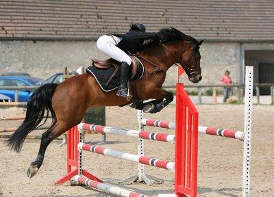 """"""" Etre heureux à cheval, c'est être entre ciel et terre, à une hauteur qui n'existe pas """""""