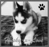 Husky-x-Love
