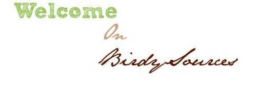 Bienvenue sur Birdy-in-my-heart l'actu Birdy