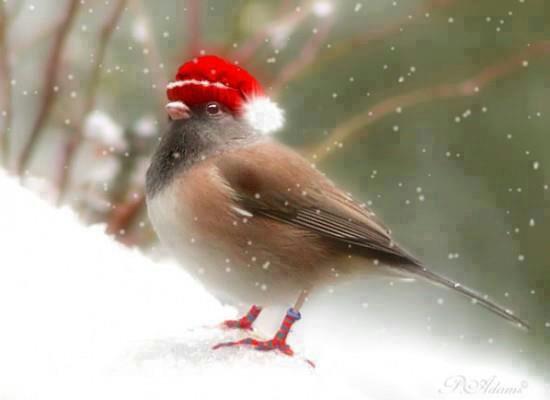 Petit Message du Père Noël.