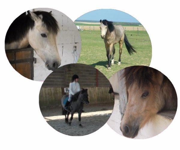 Voyager à dos d'un poney ♥