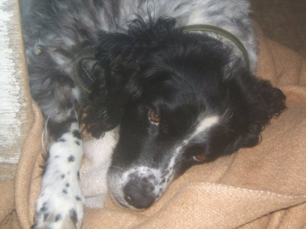 rocky mort il y a 5 ans deja