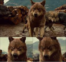 encore les loup garou