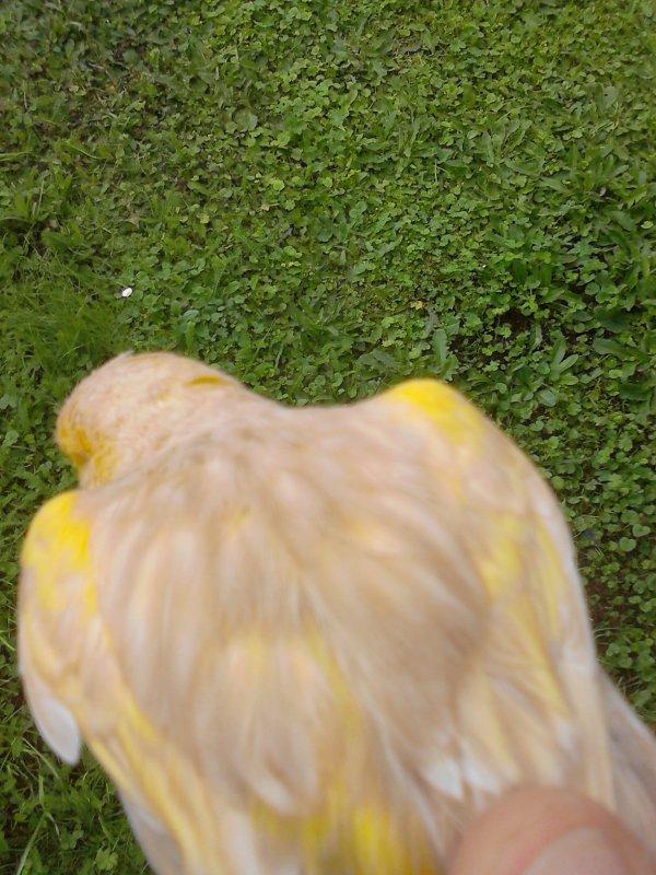 Brun topaze mosaïque jaune