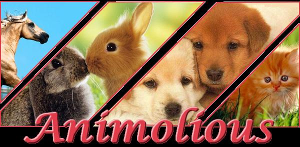 Blog - Animolious