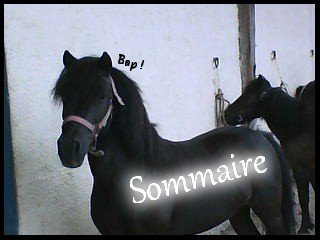 Sommaire ♥