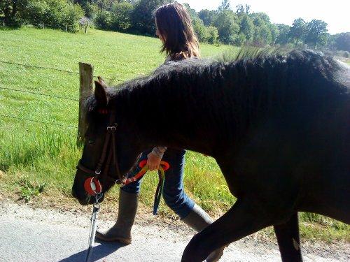 """""""Pour s'ouvrir aux chevaux et à ce qu'ils peuvent nous apprendre, il faut remballer son égo."""""""