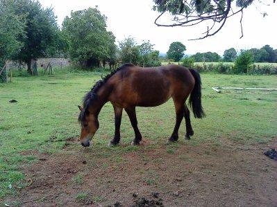 """""""Si vous parlez avec le cheval vous saurez vous faire écouter """""""