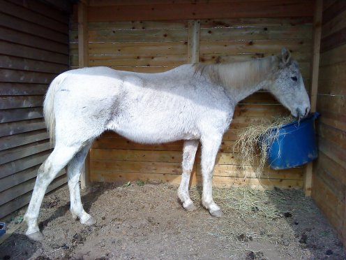 Un cheval peut être différent entre son apparence et son intérieur. Il peut se révéler parfois comme un animal féerique...