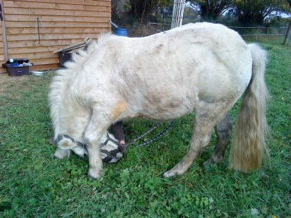 """""""On ne murmure rien à nos chevaux, c'est eux qui nous parlent. """""""
