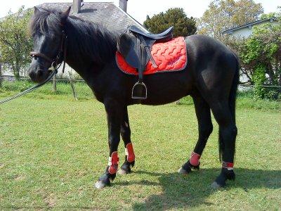 """""""Comprendre le cheval c'est réapprendre le bon sens. Celui du cheval. C'est savoir se remettre en question, c'est aussi pouvoir se dire « que puis-je faire pour améliorer cette situation, ce mouvement ? ». C'est lire le cheval, savoir de quoi il a besoin pour grandir... Puis le lui offrir"""""""