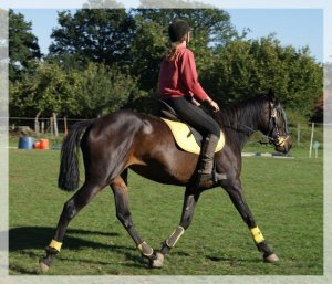 Quand le cheval devient lumière, l'homme s'efface pour ne pas faire d'ombre à sa plus belle conquête.