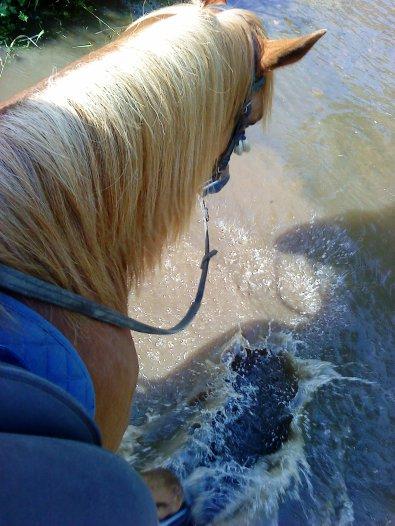 """""""On ne monte pas un cheval avec la force mais avec la tete et le coeur"""""""