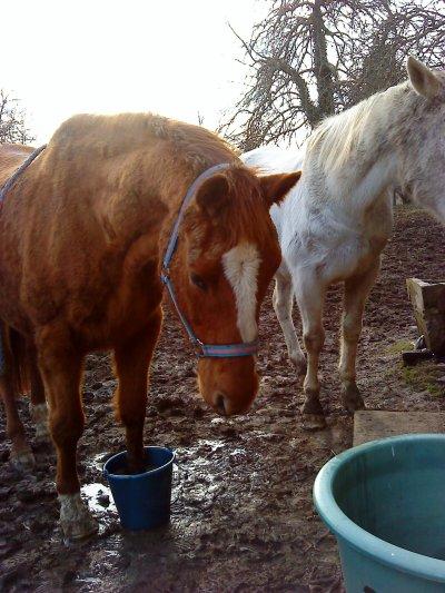 """""""Appréciez votre cheval pour ce qu'il peut faire et arrêtez de vous arrachez les cheveux dans vos tentatives pour lui faire exécuter ce qu'il ne peut pas"""""""