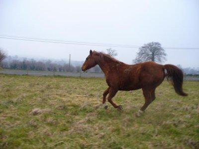 """""""Le cheval est le seul animal qui lorsqu'il se déplace semble toujours écouté de la musique."""""""