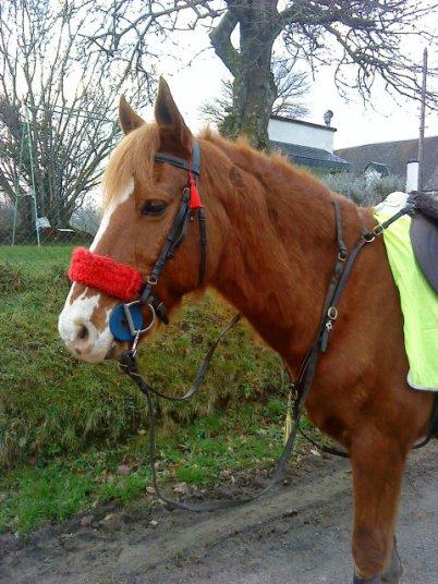 «La connaissance du naturel d'un cheval est un des premiers fondements de l'art de le monter et tout homme de cheval en doit faire sa principale étude.»