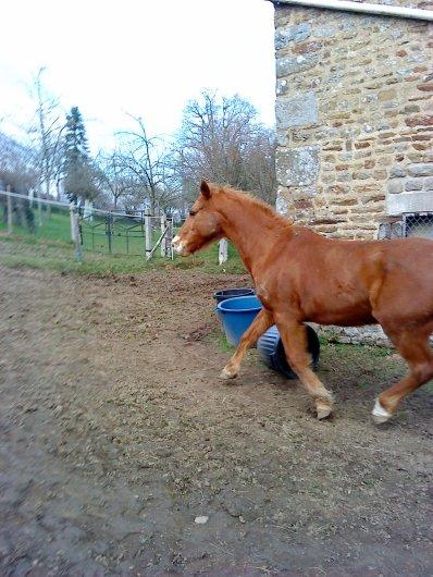 """""""Les chevaux ne respectent que ce qui les respectent ! Si je pleure, tu pleure...si je rit, tu rit. Mais si je meure je t'en prie ne me suis pas !"""""""