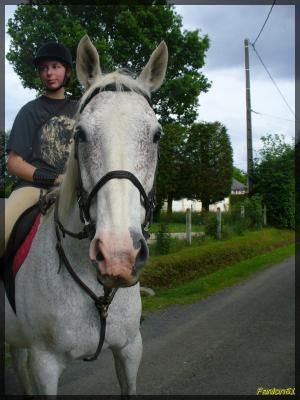 Nous et les chevaux