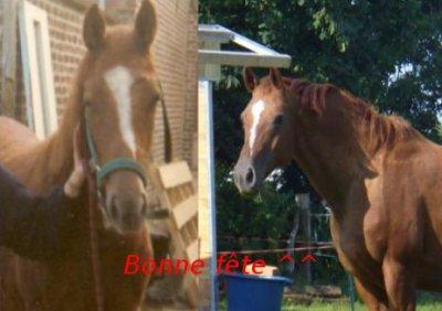 """""""Ne prête jamais ton cheval car il fait partie de toi."""""""
