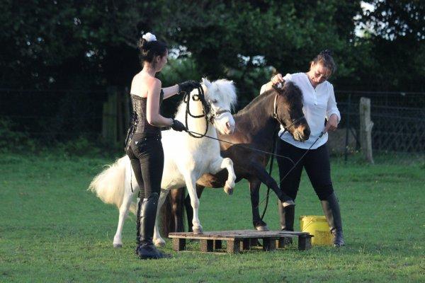 « Le cheval n'a pas demandé à faire de l'équitation. Le premier devoir du cavalier, c'est donc d'essayer de lui faire apprécier ce boulot. »