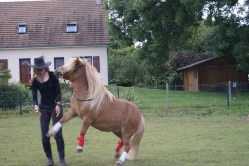 """ Regarde un cavalier sans son cheval, il lui manque la moitié de son sang."""
