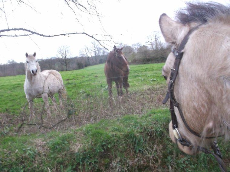 """""""La connaissances du naturel d'un cheval est l'un des premiers fondements de l'art de le monter, et tout homme de cheval doit en faire sa principale étude."""""""