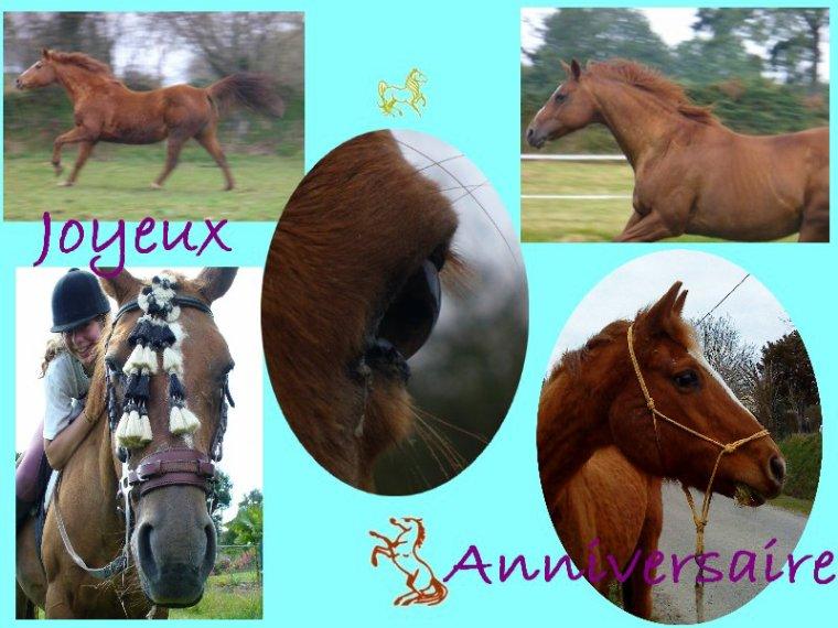 Être aimé par un cheval ou par un autre animal doit nous remplir d'humilité et de reconnaissance, car nous ne le méritons pas.