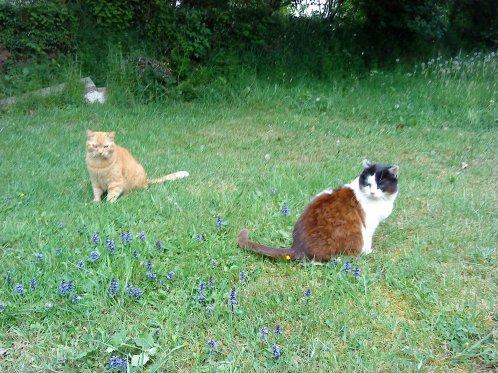 Le chat à nos cotés est le souvenir chaud, ronronnant et moustachu d'un paradis perdu...