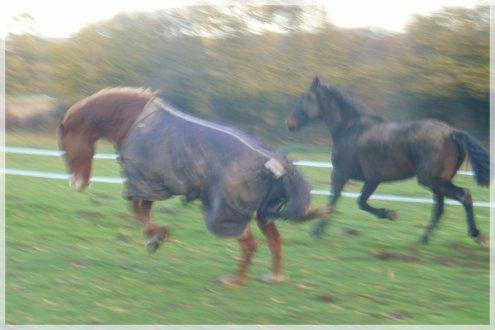"""""""Le cheval sait être poétique quand il le veut..."""""""