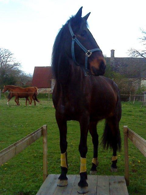 """"""" J'ai cru enfant que pour aimer les chevaux il fallait les monter, et c'est au fil de longues années d'obstination équestre que j'ai compris la méprise. D'assise sur leur dos, je me suis couchée à leurs pieds."""""""
