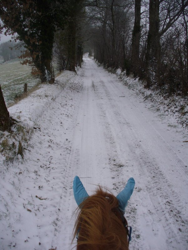 Il faudrait que bien des cavaliers fassent la différence entre faire du cheval et être avec son cheval. Le voir comme un être à part entière, un compagnon et non comme un outil de loisirs et compétition.