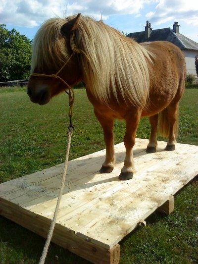 Quand on monte un cheval dans un pré c'est comme-ci qu'on monter un ange sur les terres du paradis.