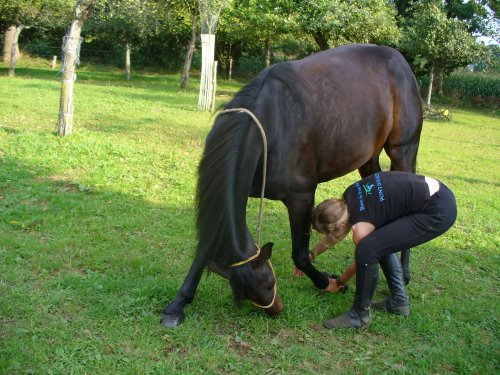 Quand l'homme eut inventé la selle, il s'aperçut que le plus gros restait à faire : rattraper le cheval.