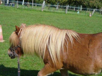 """""""Un cheval se met à danser sur la musique invisible d'un pipeau."""""""