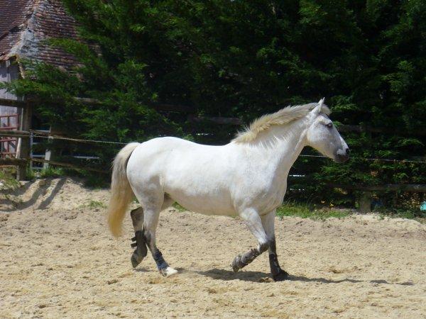 Le cheval... miroir parfait... nous permet de prendre confiance dans nos intuitions et nous engage à exprimer nos véritables ressentis profonds.