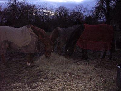 Avec les chevaux tu sais prendre des risques, essaie de faire la même chose avec les gens ...
