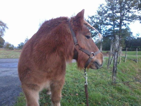 Le cheval porte son cavalier avec vigueur et rapidité. Mais c'est le cavalier qui conduit le cheval. Le talent conduit l'artiste à de hauts sommets. Mais c'est l'artiste qui maîtrise son talent.