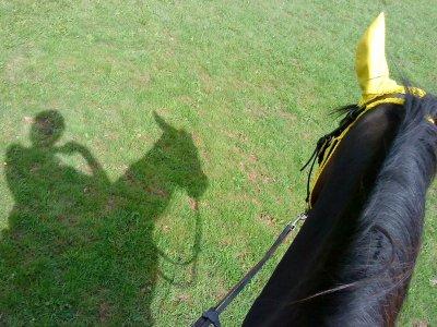 """"""" Apprenez à écouter ce que votre cheval murmure à votre oreille """""""