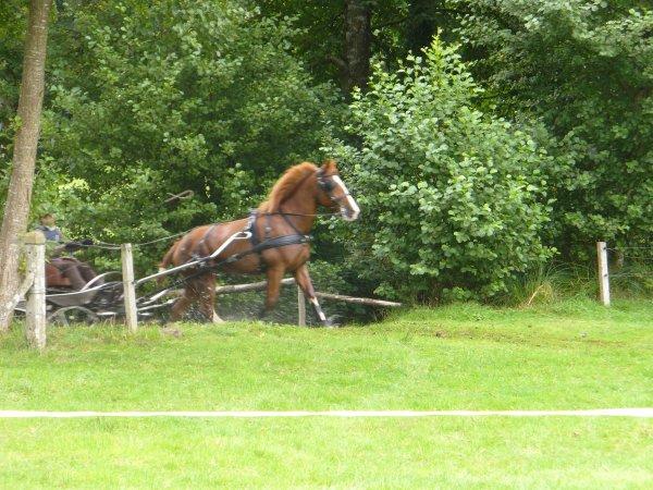 « Le cheval léger est une notion aussi vague que celle de la température avant l'invention du thermomètre. »