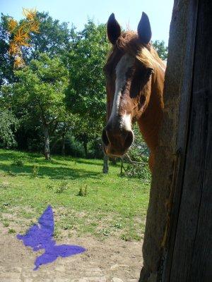 """"""" Parce qu'au fond, les cavaliers passionés restent les gamins qui rêvent de leur poney. """""""