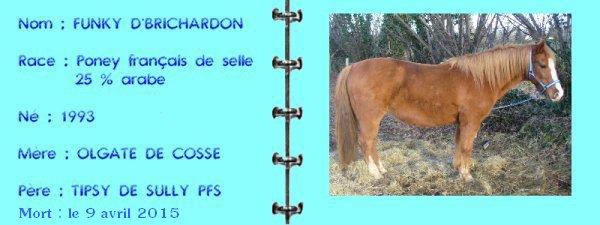 ✿ Funky, le poney dangereux ✿