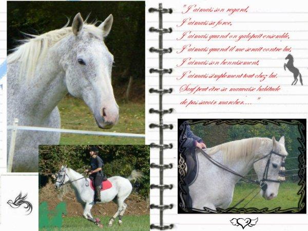 """""""Il faut une minute pour remarquer un cheval, une heure pour l'apprécier, une journée pour l'aimer mais toute une vie pour l'oublier ..."""""""