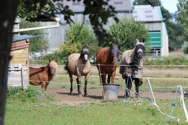 """"""" Dans tout cheval sauvage, il y a un gentil cheval qui sommeille et dans tout gentil cheval, il y a un cheval sauvage qui sommeille !"""""""