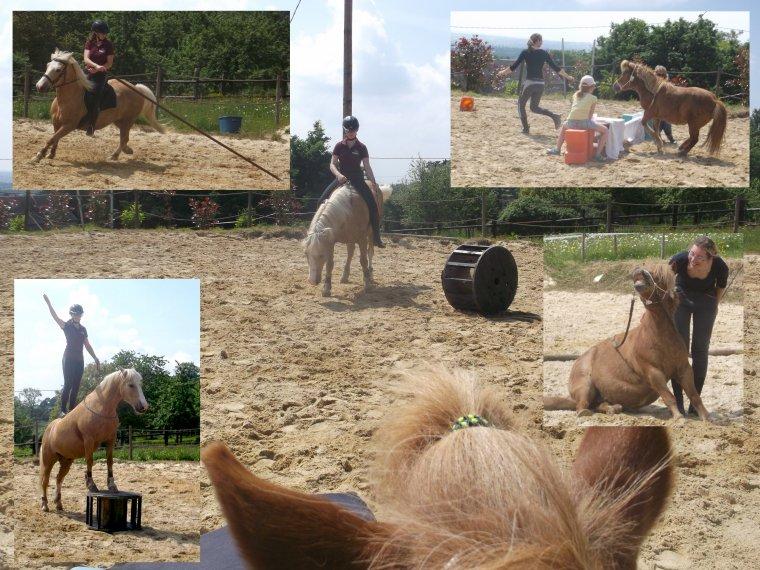 """""""Le cheval maître dans cet art de la communication subtile, aide l'être humain à aller vers la découverte d'un monde merveilleux qui existe à l'intérieur de sa personne."""""""