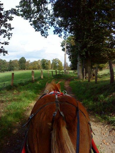 """""""Lance ton coeur par dessus l'obstacle et ton cheval suivra"""""""