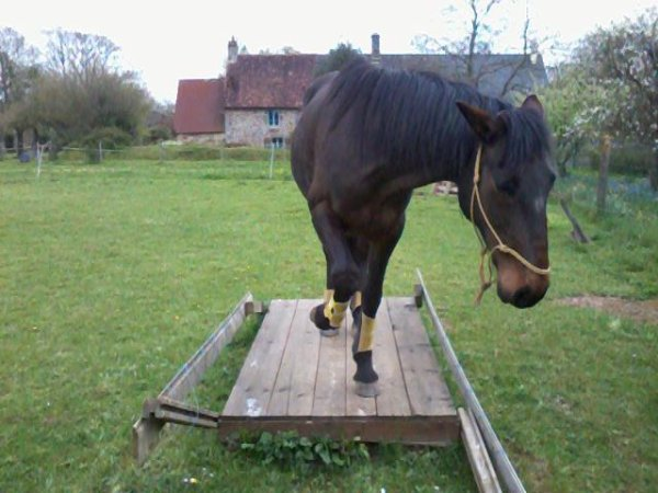 Parfois un progrès dans l'entraînement des chevaux se fait rapidement... parfois il dure des mois. Le processus d'apprentissage des chevaux suit un rythme naturel : il suit leur capacité... leur croissance.