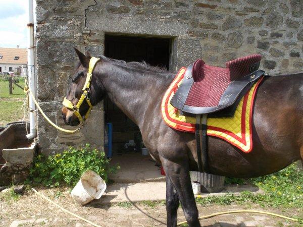 'De même qu'une grande distance révèle un bon cheval,  le temps révèle une personne de bien.'