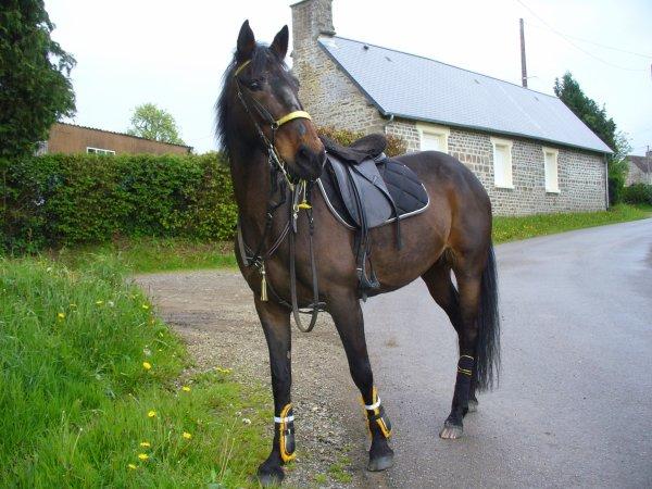 Un MOI... camouflé par des masques et des habitudes paralysantes est trop lent pour pouvoir réagir de façon appropriée à une situation menaçante. Un cheval ne peut pas faire confiance à un tel guide.