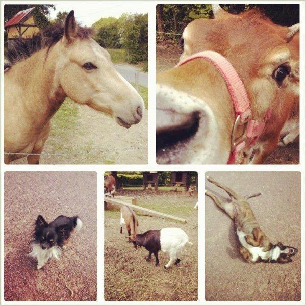 """""""Les chevaux qui partagent notre vie sont nos baromètres émotionnels... Lorsque nous vivons certaines situations... ils le ressentent et nous envoient un message... puis un autre... et un autre... afin que nous prenions conscience de ce que nous vivons et par la suite trouvions un moyen pour y remédier... """""""