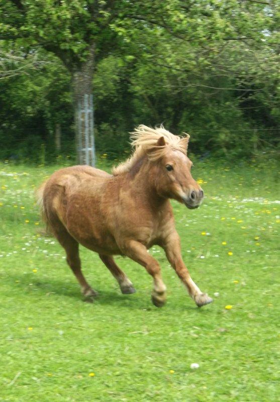 """«Quand votre cheval vous suit sans y être invité, quand il frotte sa tête sur la vôtre, et quand vous le regardez et sentez un frisson dans le dos ...Vous savez que vous êtes aimé."""""""